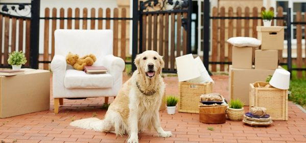Tips for a Successful Moving with Pets