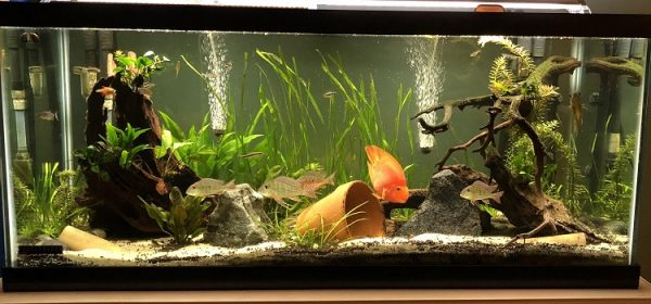 Things to Watch Out for When Moving in Aquarium