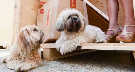 Useful Guidelines For Relocating With Domestic Animals