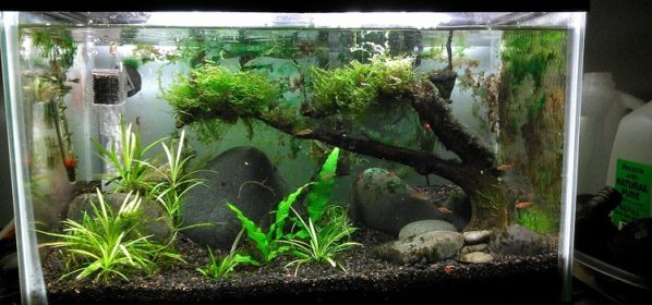 Hauling a Fish Tank